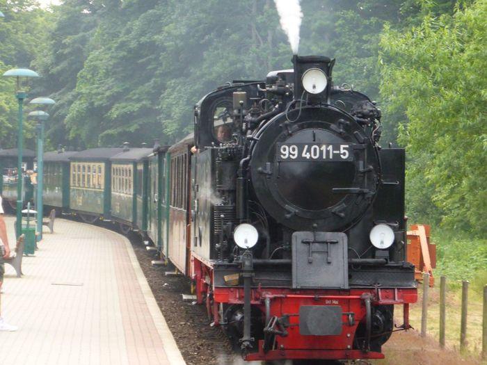 Rasender Roland Transportation Train Train - Vehicle Rail Transportation Mode Of Transportation Tree Steam Train