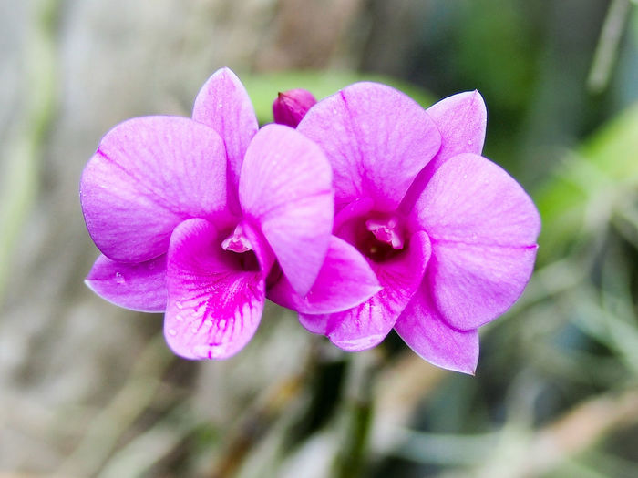 Colors Of Ochids Nature_collection Pink Color Flower Plant Nature Petal Close-up Outdoors Focus On Foreground Beauty In Nature Day No People Fragility Growth Flower Head Freshness Petunia