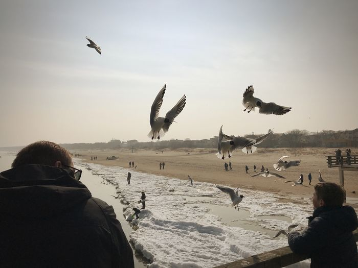 Father, Son and Birds Seagulls In Flight Seagulls SEAGULL IN FLIGHT Winter Beach Beach Life Sky Beach Vertebrate Flying Land Nature Animal Real People Group Of Animals Bird Animal Wildlife Large Group Of Animals Animals In The Wild Sea Flock Of Birds Animal Themes Sand Water