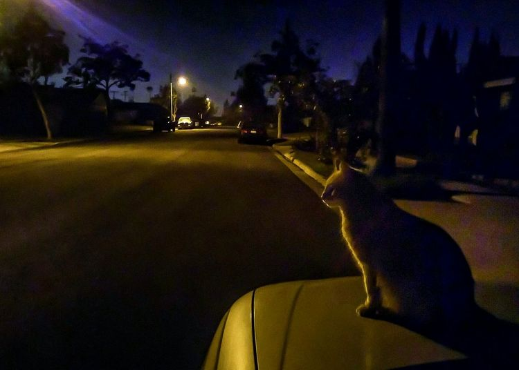 Similar to a pic I took about three months ago. That was 8 megapixels, this one is 13 megapixels. My cat Jakester has come out to greet me as I arrive home late at night with groceries and of course some cat food and cat treats. He is so funny...as I start walking up the driveway, he'll give me a headstart and then when I'm halfway there, he'll come whizzing by and be waiting for me at the front door. As long as I've known him, my Jake loves to run. This is just further experimenting with my smartphone camera, seeing how far I can push it, and what photo editing apps like Photoshopexpress and Snapseed are capable of doing. I'm still working on getting my computer fixed and/or returned to me so for the time being everything I do is on a smartphone. Smartphone Photography Night Photography Street Photography Cat Photography Available Light Kitteh Ilovemycat Nightscape Nightscene Suburban Landscape Suburban Street Night Sky My Cat Caturday Caturdayeve Suburban Sky Streetlights Learn & Shoot: After Dark