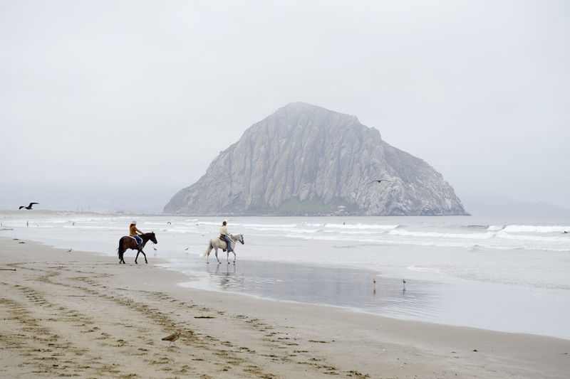 morro rock Animal Themes Beach Day Domestic Animals Foggy Morning Horse Horseback Riding Morro Bay, California Mountain Nature Outdoors Overcast Skies Pacific Coast Rappensuncle Sand Sea Sky Water Waves Wide Angle