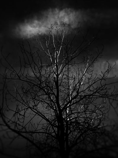 Plant Nature Tree Sky No People Beauty In Nature Branch Bare Tree Growth Silhouette Outdoors Tranquility Selective Focus Close-up Fragility Day Low Angle View Dusk Cloud - Sky Vulnerability