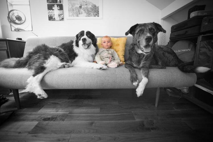Pets Corner Baby Dog Dogsitter First Job