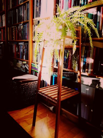 Bookshelf Indoors  No People Day Library Sunlight Winter Sun Light And Shadow Plant Bookshelf Books Shades Of Brown Warmth Of The Sun Interior Atmosphere
