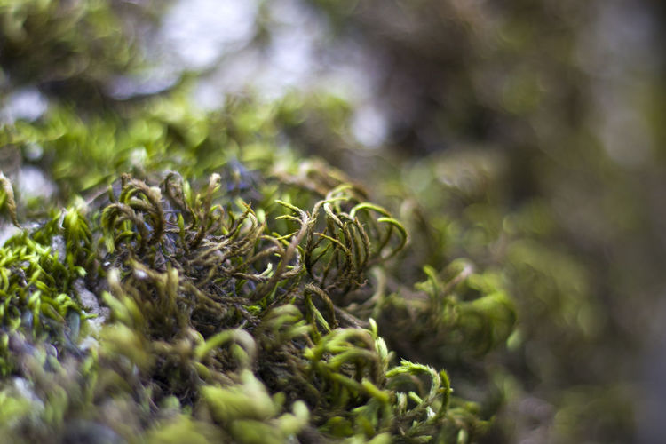 Macro and close-up of moss on the tree branch, georgia, green color.