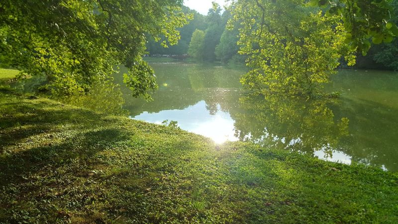 Tree Water Tranquil Scene Tranquility Growth Green Color Scenics Beauty In Nature Nature Reflection Plant Green Non-urban Scene Day Lens Flare Calm Lush Foliage Outdoors No People Remote