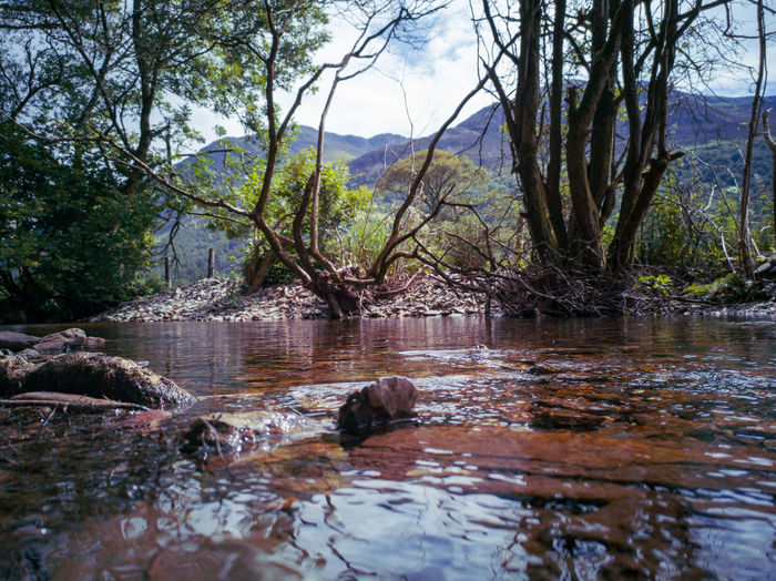 Surface level of river flowing in forest