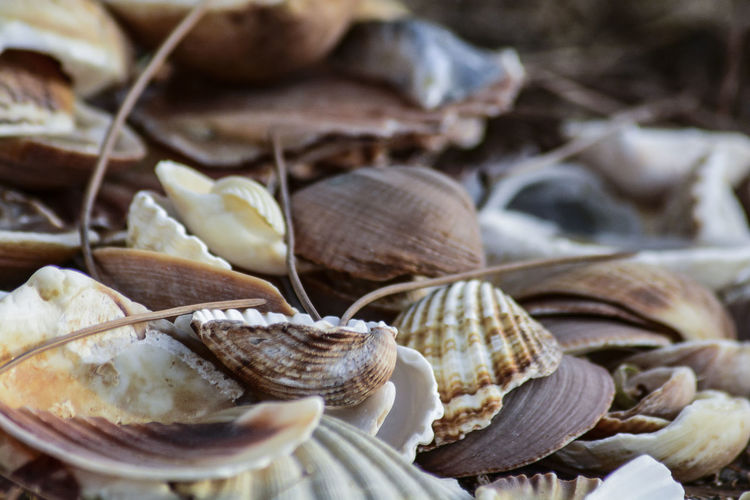 Close-up of shells for sale