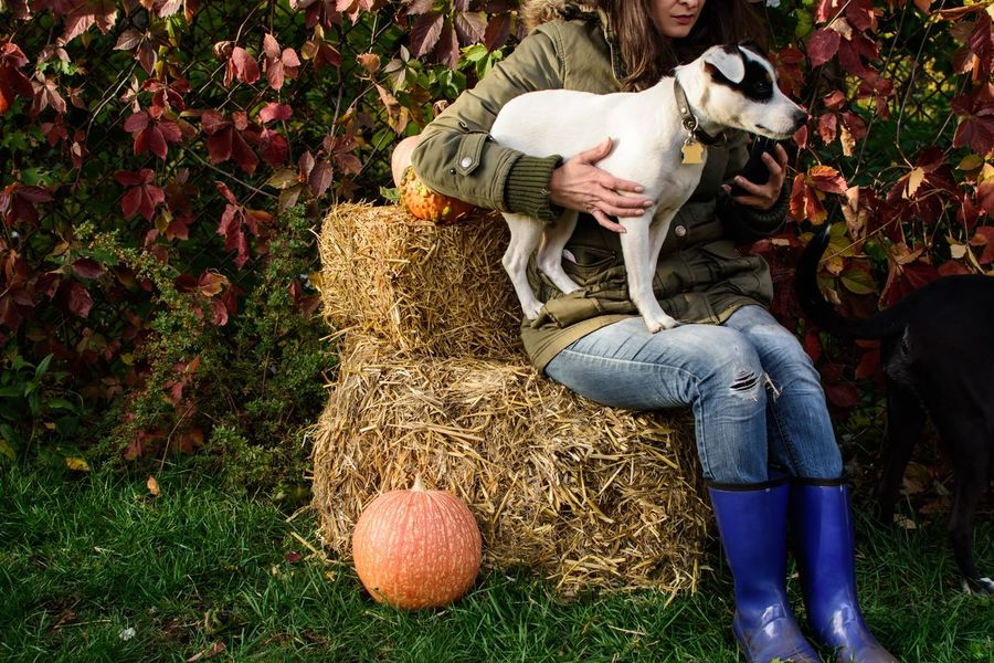 Woman relaxing outdoors with cute dog sitting on haystack with Thanksgiving pumpkins wearing cozy clothes and using mobile phone Healthy Lifestyle Tranquility Copy Space Real Life Real People Sitting Fall Beauty Dog Cute Dog  Woman Woman Portrait Hay Stack Pumpkin Thanksgiving Real People One Person Nature Casual Clothing Lifestyles Adult Day Women Leisure Activity Full Length Growth Grass Field Domestic Animals Outdoors Jeans Autumn Mood