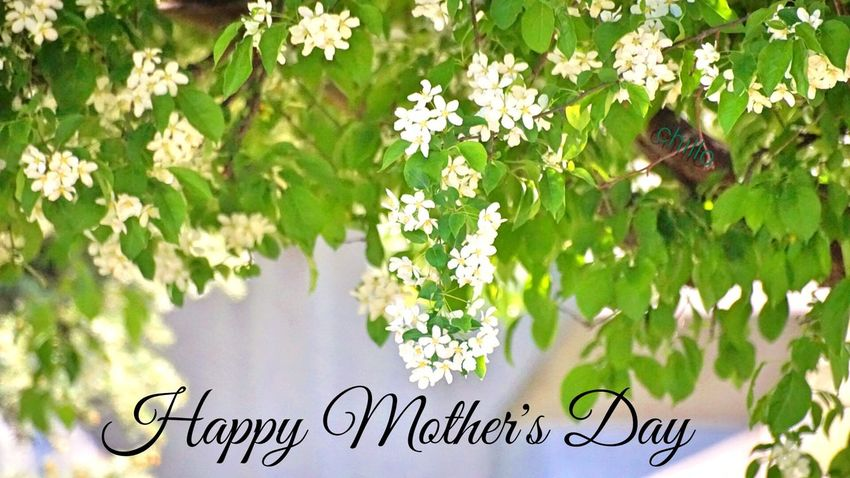 Happy Mother's Day. Mothersday Beauty Love EyeEm Nature Lover Eye4photography  EyeEm Best Shots Sony A6000 Photography Enjoying Life Color