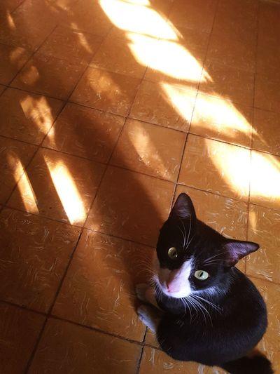 mask Sun Shadow