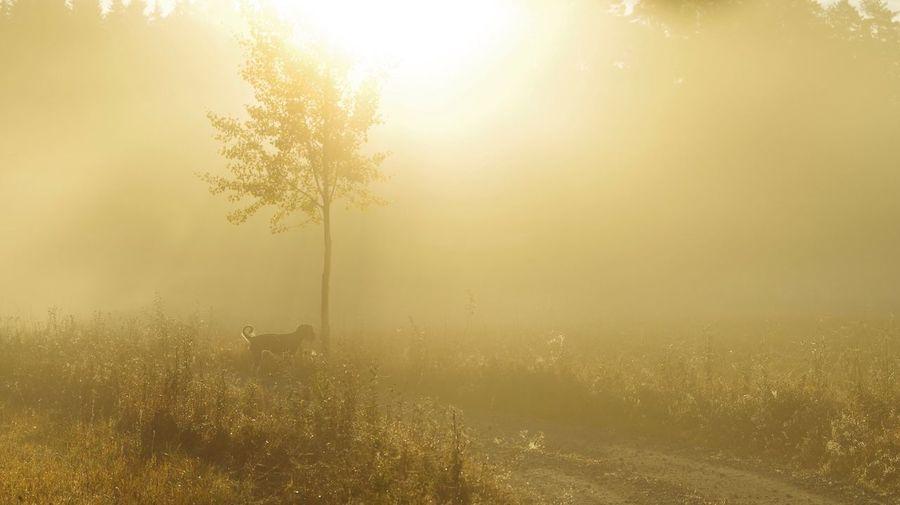 Misty Landscape Flooded With Golden Sunlight