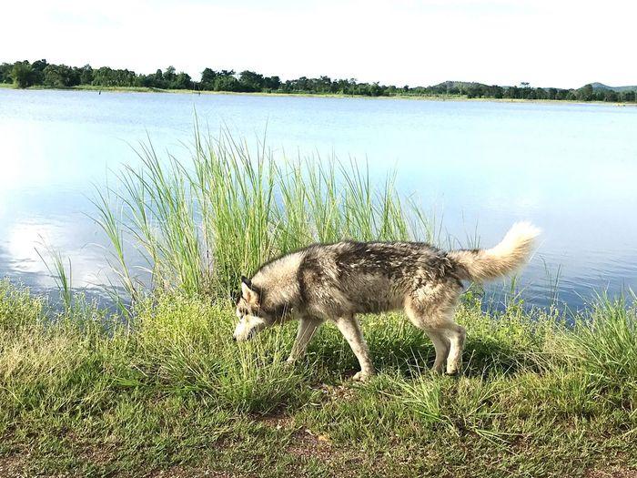 Dog in lake against sky