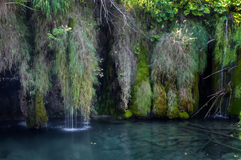 Forest Tree Plant Water Scenics - Nature Beauty In Nature Land Nature No People Tranquility Day Tranquil Scene Green Color Foliage Lush Foliage Outdoors WoodLand Flowing Water Flowing Plitvice National Park Croatia Zen Vacation