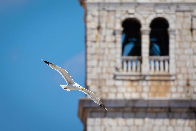 Animal Animals Animallovers Bird Of Prey Bird Spread Wings Flying Falcon - Bird Blue Clear Sky Sky Architecture Animal Themes Seagull Animal Wing Sea Bird Flapping