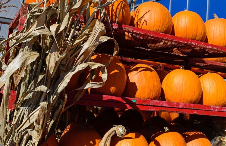Large Group Of Objects Abundance Retail  Close-up Full Frame Multi Colored Order Choice Group Of Objects Variation Heap Collection Outdoors Shelf No People Arrangement Man Made Object Halloween_Collection Halloween Pumpkins Pumpkinpicking Outdoor Market Corn Husk Fall Ingredients