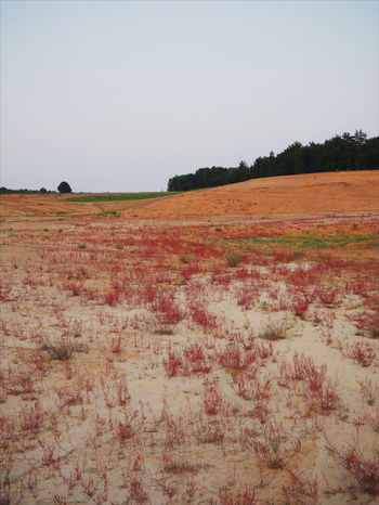 Outdoors Landscape Nature Cereal Plant Red Rural Scene Crop  Field Growth Red Grass