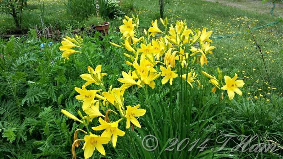 TheLandscapist Nature_collection Flowers,Plants & Garden Yardpic