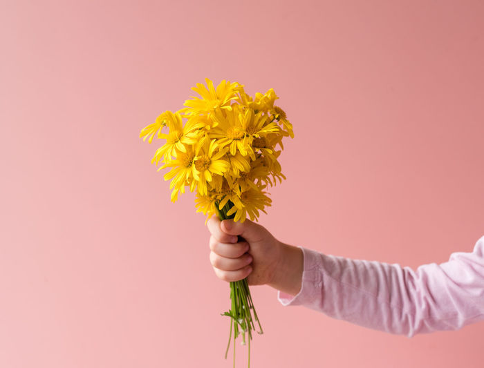 Close-up of hand holding yellow flowers against pink background