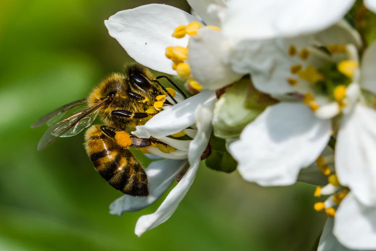 a Bee's Life,