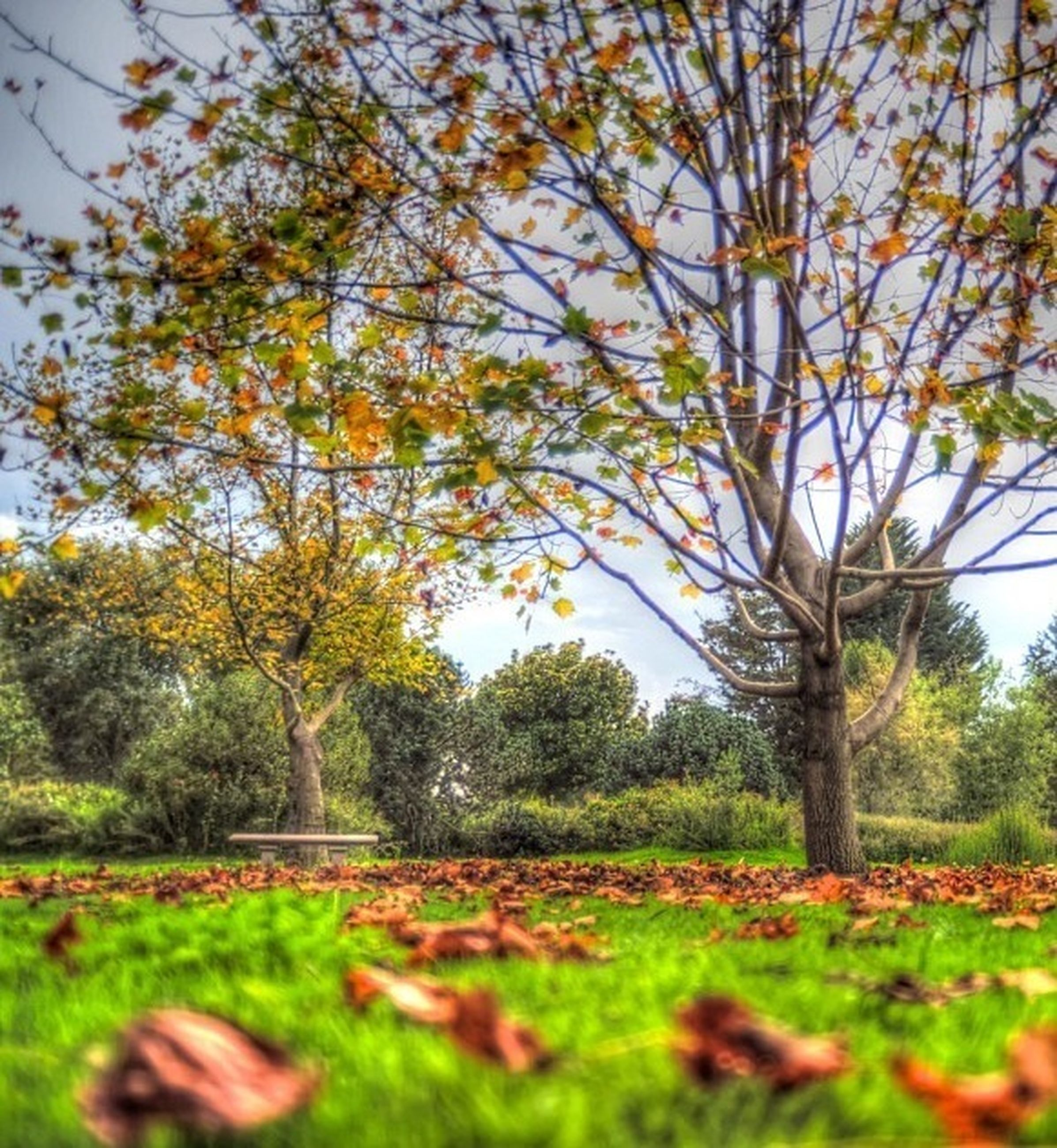 tree, autumn, growth, change, tranquility, leaf, nature, season, beauty in nature, tranquil scene, sunlight, branch, park - man made space, grass, green color, scenics, field, day, fallen, landscape