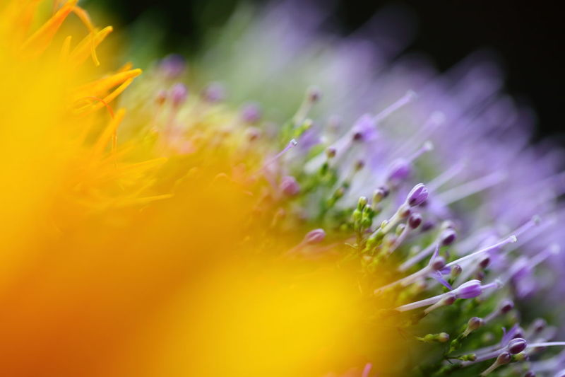 Abstract Art Abstract Nature Abstractions In Colors Blurred Blurred Background Blurred Lights Blurred Visions Close-up Explosion Of Colors Flower Flower Head Fragility Freshness Growth Impressionism Impressions Of Joy Petal Springtime