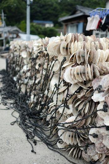 Holiday Trip Island Landscape Fishing Gear at kashirajima Japan