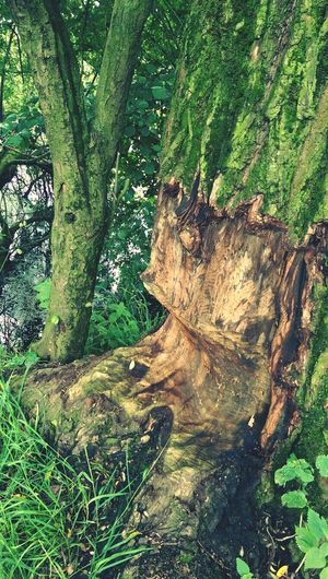 Tree Beaver Work Enjoying Nature JK14