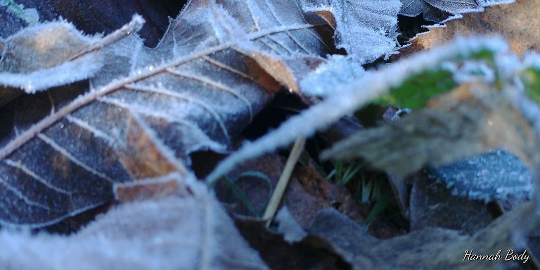 Frost Frosted Frosty Morning Leafs Leafs 🍃 Morning Morning Light Nature Photography Winter Leaf Wintertime Frosted Landscapes Frosted Leaves Frosted Nature Frosted Plants Frosty Frosty Days Frosty Leaves Frosty Mornings Leaf Leafs On The Ground Leafs Photography Outdoor Photography Outdoors Winter Winter Leaves