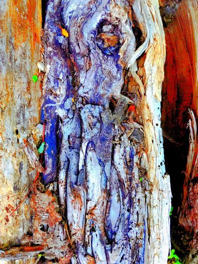 Tree Wood Crack Close-up Outdoors No People Textured  Nature Life In Colors Magnificent Naturetellsstories ZoomInToDetail Eyes Looking At Camera Do You See What I See? DareToBeDIFFERENT Beauty In Nature Creativity Artbyart Photography From the cracks of the shadows of the old wooden tree, I spy an old lady looking at me. With creatures surround this old witches tale is shown here in color, look into details!