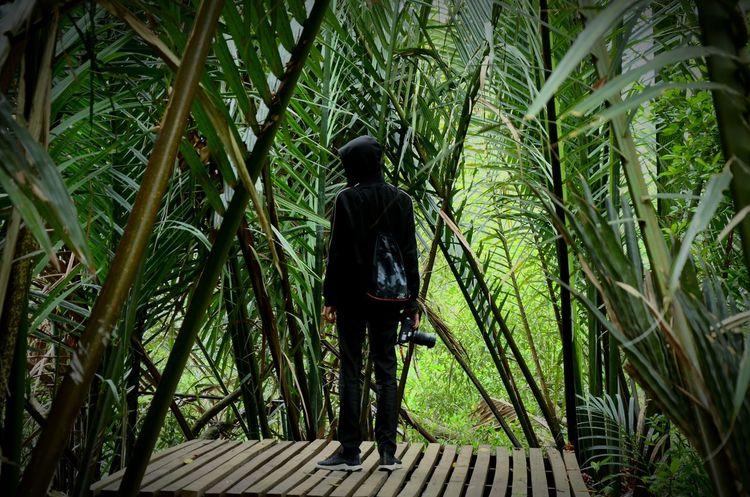 get in nature ADIB2803 Nikon Nature Tree Full Length Men Palm Tree Standing Walking Coconut Palm Tree Tropical Tree Coconut Tropical Climate Palm Leaf Hiker Growing Houseboat