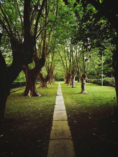 Islas Del Delta Dekta Tigre Arroyo Angostura Tree Nature Green Color Outdoors Day Growth No People