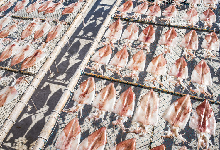 High angle view of squids drying on net