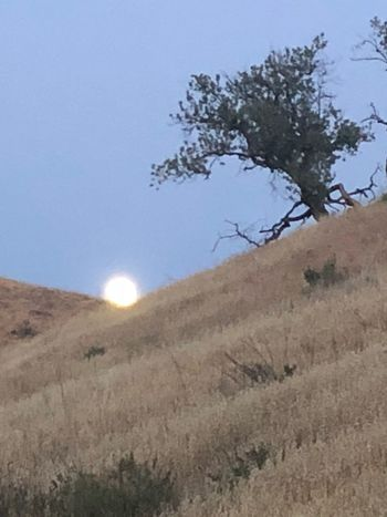 Moon rising over hills Sky Plant Tree Beauty In Nature Tranquility No People Tranquil Scene Nature Moon Outdoors