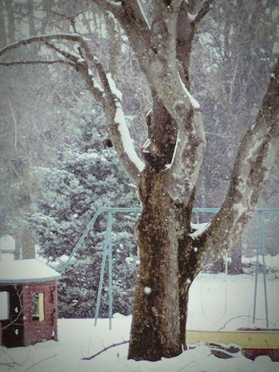 Pileated Woodpecker EyeEmNewHere Woodpecker Pileated Woodpecker Playground Nursery School Bird Tree Trunk Tree Snow Winter Cold Temperature Close-up Tree Trunk Bare Tree Branch Snow Covered Cold First Eyeem Photo Schoolyard