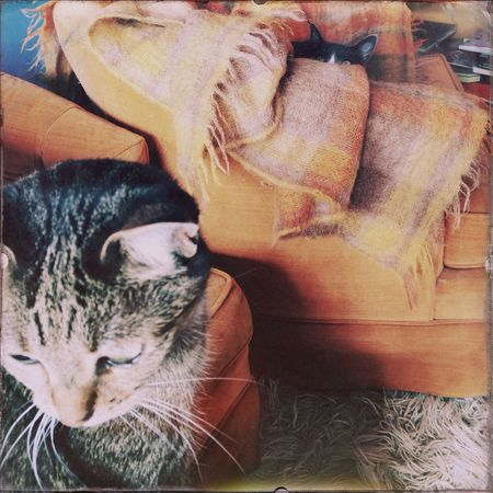 Relaxing Two Cats Hipstamatic Cat♡
