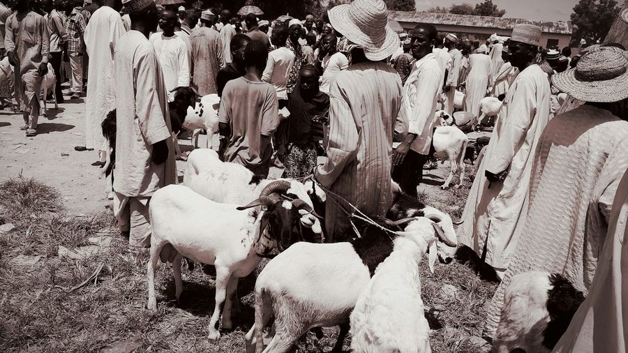 People and goats at market