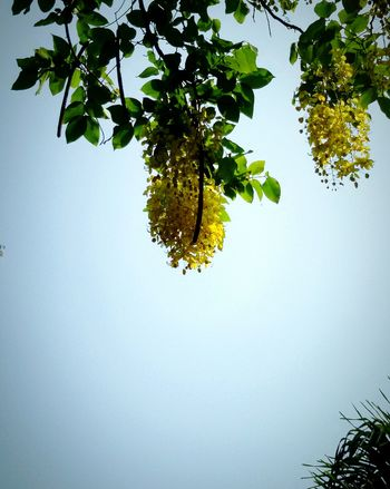 Sky and Flower : Niceday in Long Weekend, Getting in touch, Taking photos.