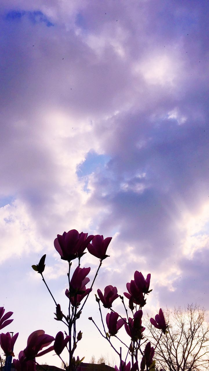 flower, beauty in nature, sky, nature, petal, fragility, cloud - sky, pink color, growth, low angle view, freshness, no people, plant, outdoors, blooming, day, flower head, sunset, tree, close-up