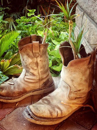 Old Boots Growth No People Plant Day Outdoors Close-up Nature Working Boot Plant