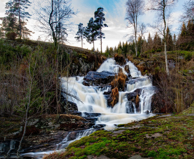 Tree Plant Water Long Exposure Motion Scenics - Nature Beauty In Nature Nature Blurred Motion Forest Waterfall Land Environment Non-urban Scene No People Rock Flowing Water Solid Flowing Outdoors Power In Nature Stream - Flowing Water Falling Water Scandinavia Nordic Nature