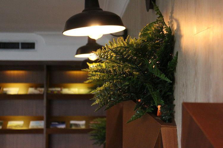 Interior Design Interior Views Interior Lamp Lamps Interior Lamp Indoor Lamp Plant Indoor Plant Indoor Showcase March