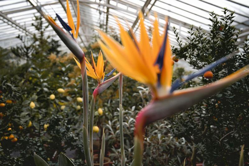 Botanik Flower