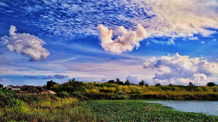 Sky Tranquility Tranquil Scene Cloud - Sky Grass Beauty In Nature Cloud Blue Scenics Growth Nature Plant Non-urban Scene Day Outdoors Green Majestic Vacations Cloudscape At Alor Setar Malaysia Field Agriculture Solitude