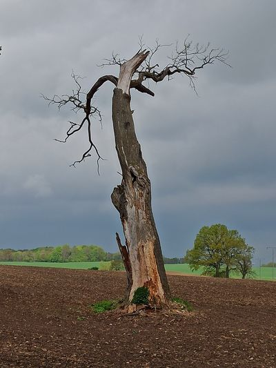 Dead tree on field against sky