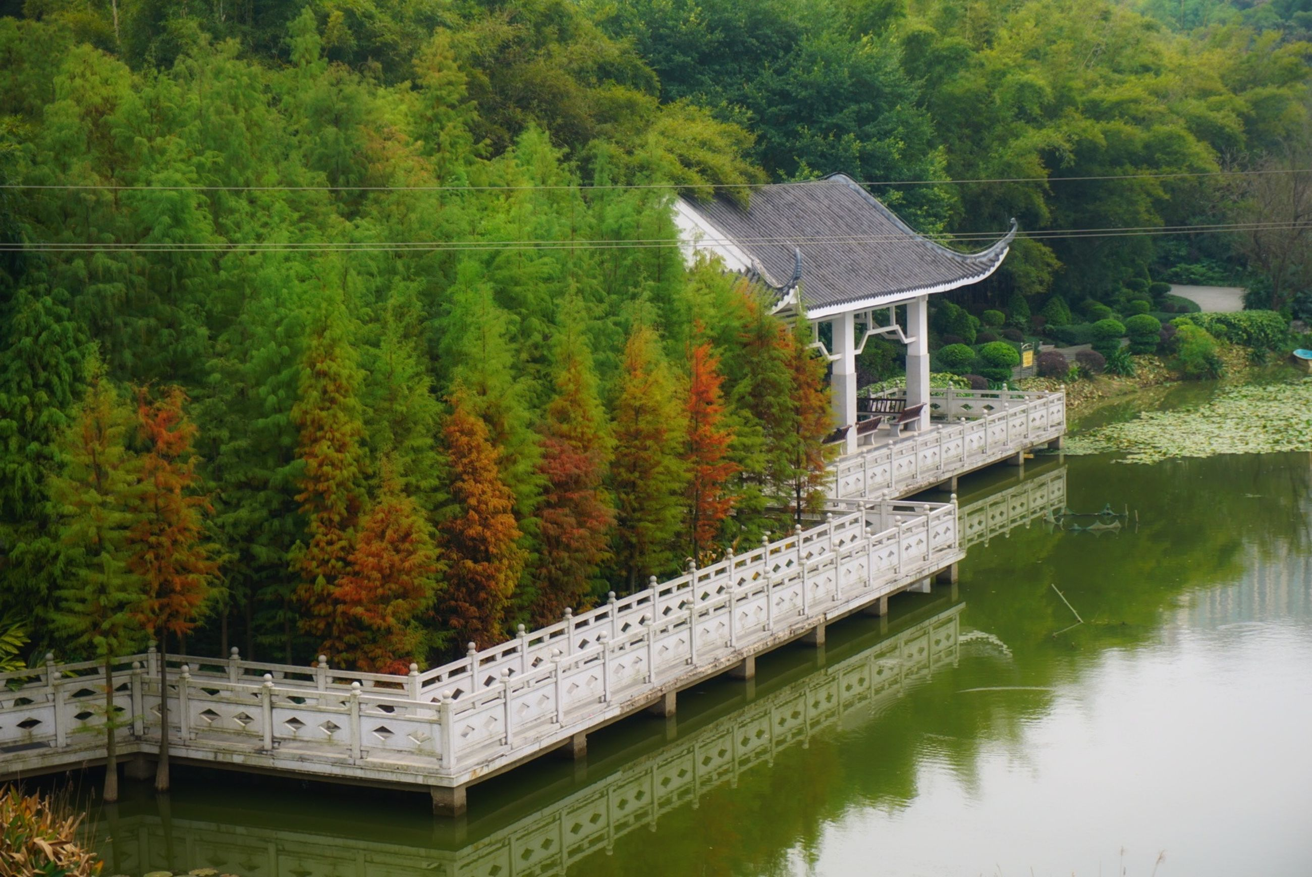 tree, water, built structure, architecture, nature, fuel and power generation, beauty in nature, scenics, no people, idyllic, tranquil scene, green color, building exterior, alternative energy, tranquility, growth, connection, renewable energy, outdoors, day, japanese garden