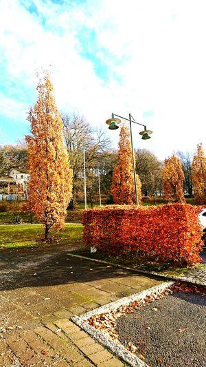 Winter in Sweden Outdoors Sky No People Nature City Leaf Winter Leaf 🍂 Sweden Borås
