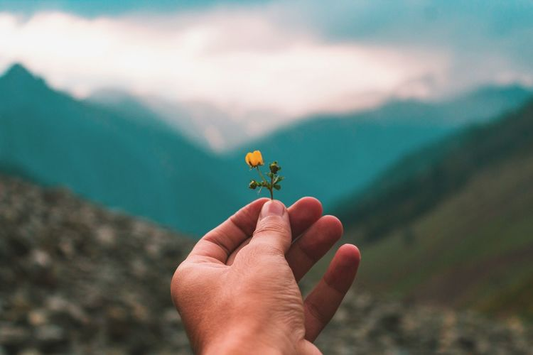 Cropped image of hand holding flower with mountains in background