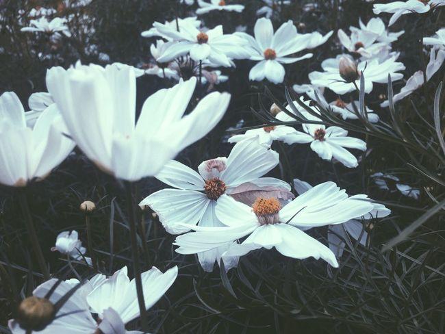 Full Of Flowers Beautiful Nature EyeEm Nature Lover