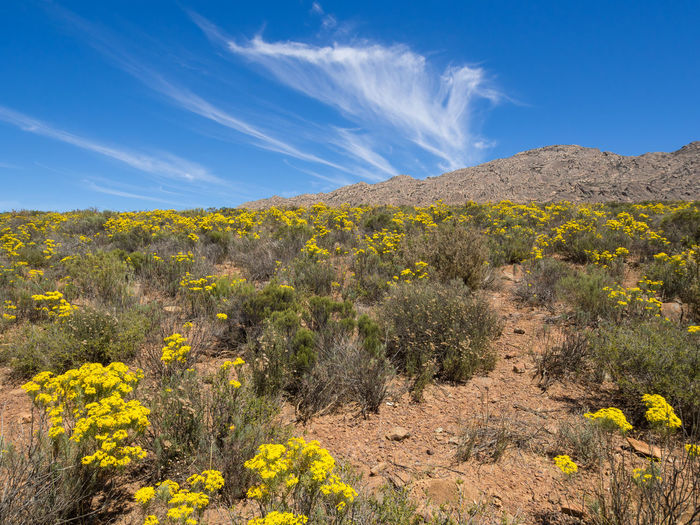 Yellow flowers growing on landscape against blue sky